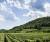 Franciacorta_Vigna e bosco